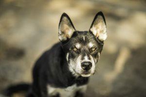 hundefotografie koenigswinter